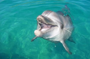 Live Dolphin Webcams