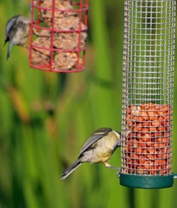 Live Wild Bird Feeder Webcams
