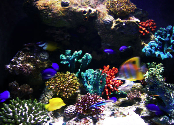 Live Aquarium Webcams Image