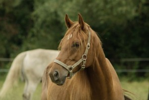 Live Horse Webcams