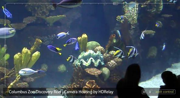 Columbus Zoo Webcams