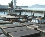 Live Sea Lion Webcams