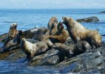 Live Seal Webcams