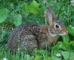 Live Rabbit Webcams